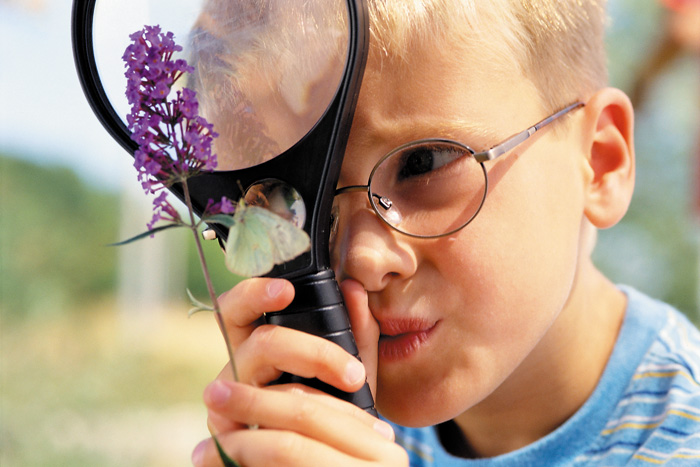 Boy Looking at Butterfly Through Magnifying Glass