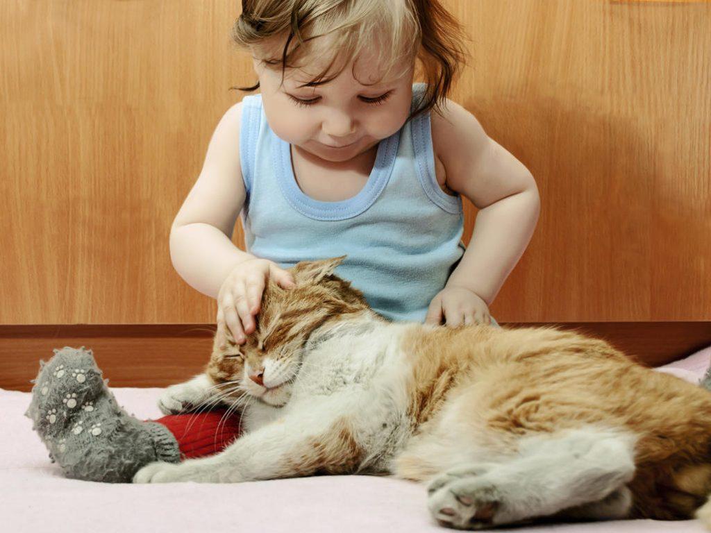 Наличие домашних животных — многие из них — могут защитить вашего ребенка от аллергии!